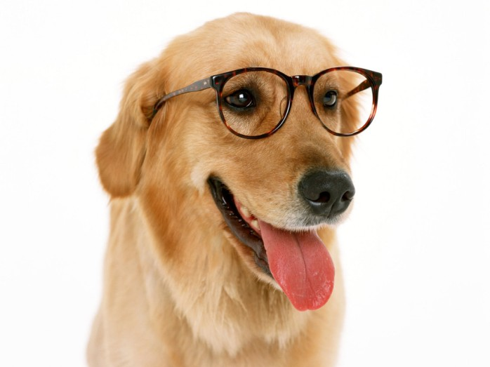 20-cute-dogs-with-glasses-015